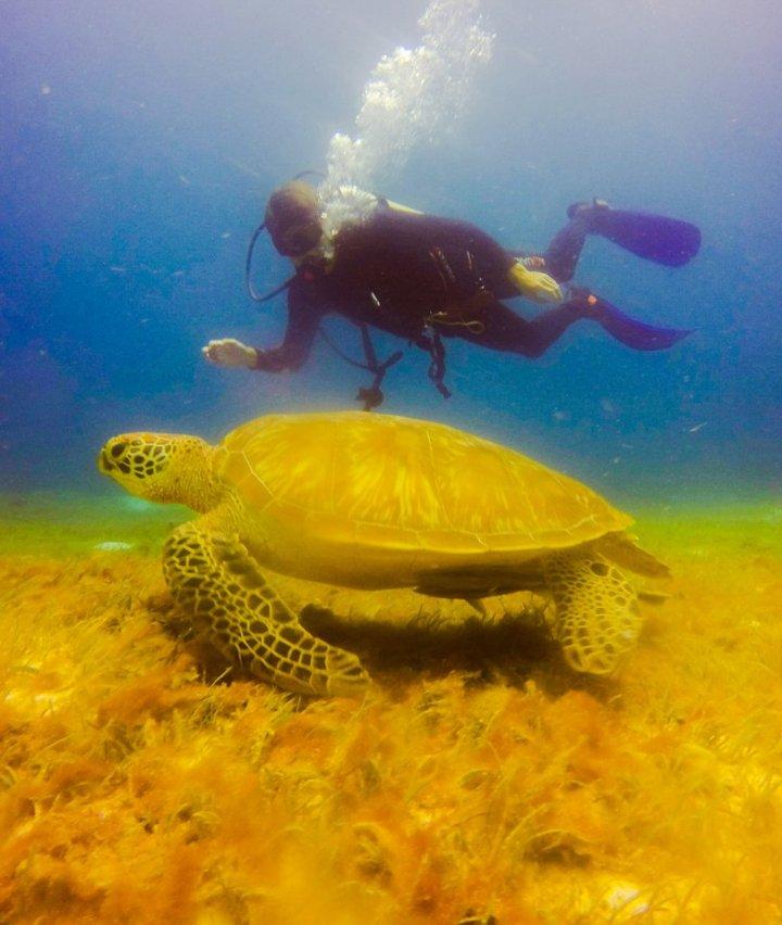 Rob zwemt dichtbij schildpad