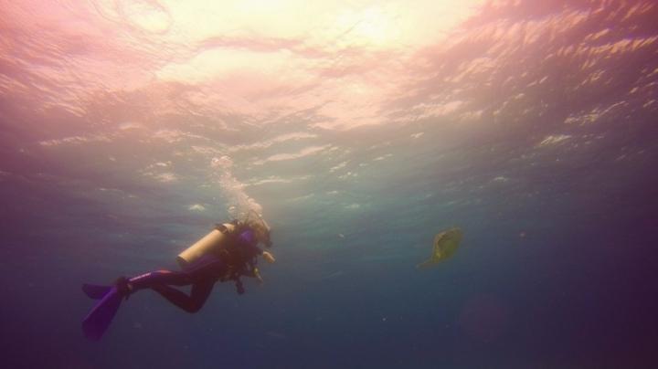 vrij zwemmen met turtle