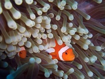 Sea anemone - source: Ask Nature
