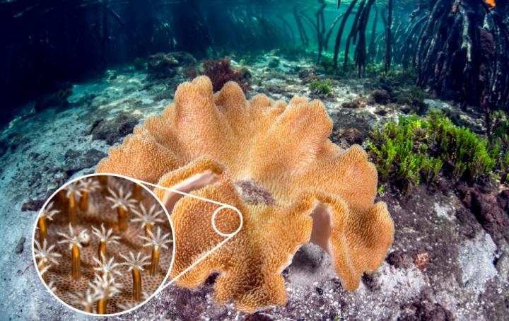 Coral polyp - dkfindout.com