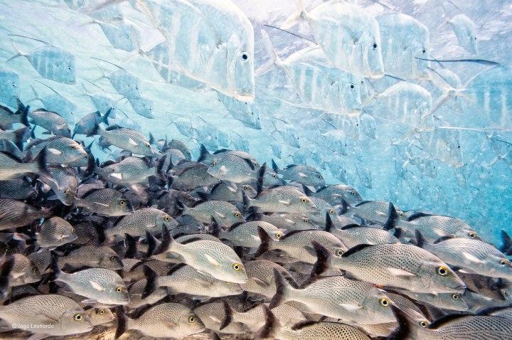 Iago Leonardo - The disappearing fish
