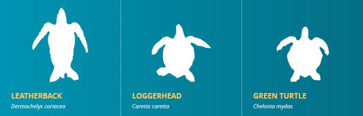 Turtle species WWF 1