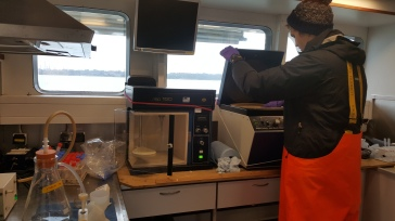 Sam in the wet lab looking at chlorophyll measurements