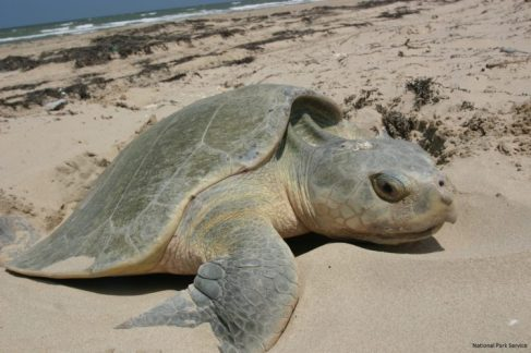 Close up. Source: National Wildlife Federation (US)