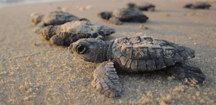 Hatchling. Source: National Wildlife Federation (US)