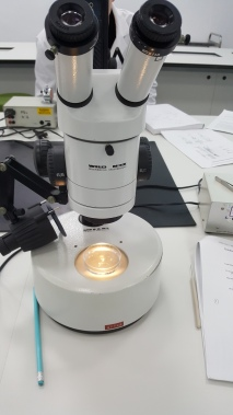 Zooplankton practical again :)