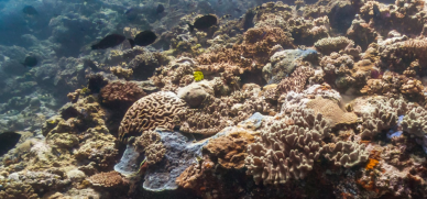 Wishbone reef, AU - Google street view