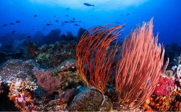 Gorgonians - source: Original Diving