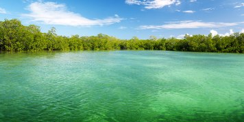 Mangrove forest - source: Feel Bonaire