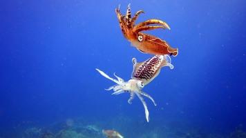 Squid dancing